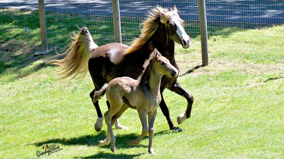 Caerleon Ranch