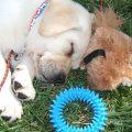 Arwen puppy