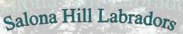 Salona Hill Labradors