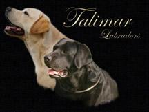Talimar Labradors