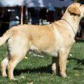 Bandit HDLRC Best Puppy