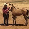 Shake's foal 7 – Bombshell 2017