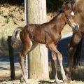 Shake's foal 3