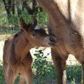 Shake's foal 2